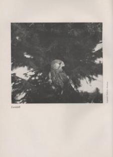 Der Oberschlesier, 1935, Jg. 17, Heft 9