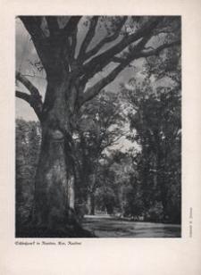 Der Oberschlesier, 1936, Jg. 18, Heft 4