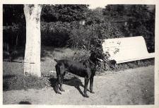 """Pies """"Drugi"""" w ogrodzie konsularnym w Opolu"""