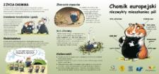 Chomik europejski niezwykły mieszkaniec pól