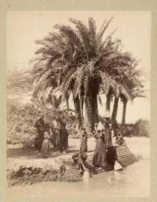 Palmiers Nº 414