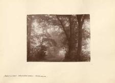 Nebel in den Oberschlesichen Wäldern