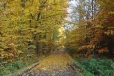 Głubczyce. Droga wiodąca do lasu Marysieńka, 2011 r.